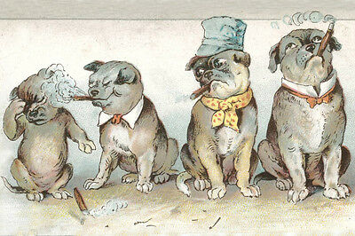 Pug SMOKE OUT Comedy Card 1910 - LARGE New Blank Note Cards