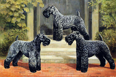 Kerry Blue Terrier Dog 1930's by Edwin Mergargee  ~ LARGE New Blank Note Cards
