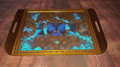 Vintage Serving Real Butterfly Tray Brazil Inlaid Wooden Tea Coffee Taxidermy