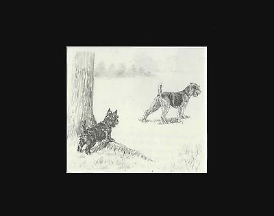 Airedale & Scottish Terrier Dogs Playing & Cute Print by  Marguerite Kirmse 1941