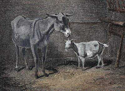 Coster-Monger's Ass Esel Donkey Goat Ziege - ORIGINAL 1814 koloriert coloured