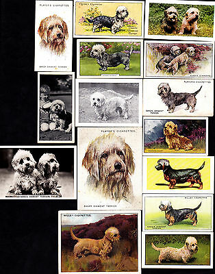 15 Different Vintage DANDIE DINMONT TERRIER Dog Cigarette Cards