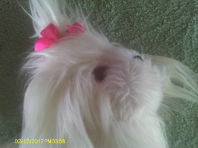 All White Plush Shih Tzu Puppy Dog with Bright Pink Bow