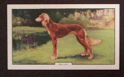 1930's Gallaher Dogs Card Saluki