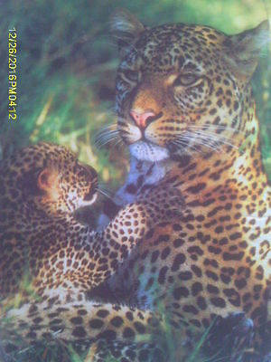 500 Piece Puzzle of Leopard Family - Momma & Cub