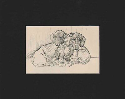 Vintage Dachshund DOXIE Dog Puppies Print 1938 by K.F. Barker in Black Mat 8X10