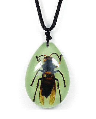 Glow In The Dark Lucite Teardrop Necklace w/ REAL Giant Wasp Hornet YD0930