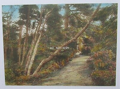 1920's Hand Colored Photo..beautiful Landscape,country Road,trees In California