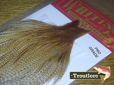 Whiting Farms Dry Fly Cape Dark Barred Ginger #3 Whole New Pro Grade Tying Neck