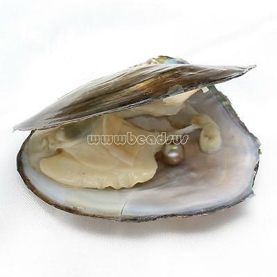 Bulk Akoya Oysters with Large Pearls 7-8mm