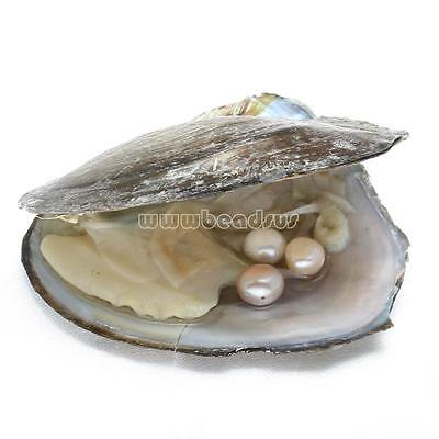 Bulk Akoya Oysters with 3pcs Large Pearls 8-9mm