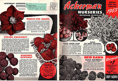 Ackerman Nurseries Bridgman Michigan Vintage 1963 Catalog Trees Shrubs Flowers