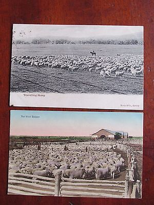 2 Postcard s Travelling Sheep  Kerry PC and Wool Station Port Darwin NT PC