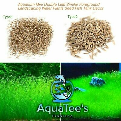 Aquarium Plant Seeds Aquatic Double Leaf Carpet Water Grass Fish Tank Decor Nano
