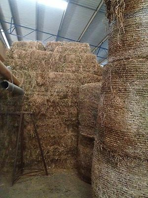 Pure Clover Hay Small Squares