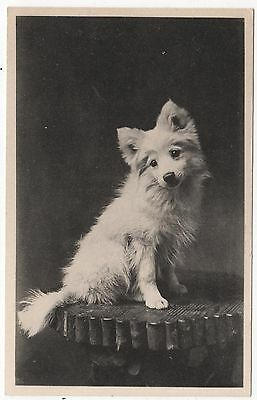 "Davidson Bros ""our Pets""  Series Real Photo Postcard  Of Dog"