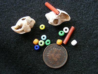 SHELL and TRADE BEADS TENNESSEE Guaranteed Authentic Indian Artifacts