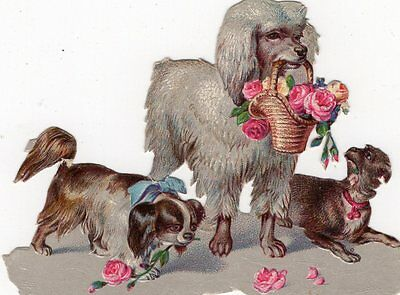 1800'S VICTORIAN - POODLE w OTHER DOGS DIECUT -TRADE CARD - SCRAPBOOK EPHEMERA