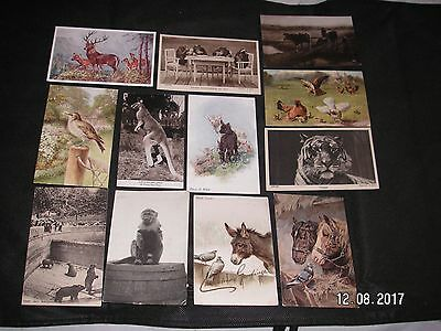 Animals -  12 Vintage  Postcards  - 3 Posted  1904  - 1938 -