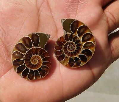 94.95 Cts Exclusive A+++ Ammonite Mix  Cabochon Loose Gemstone Natural