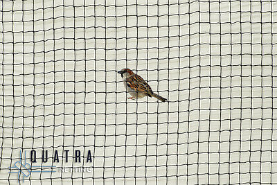 Sparrow exclusion netting, Professional Grade Knotted 19mm - 25m X 15m