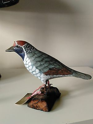 Western US Woodpecker from World of Nature