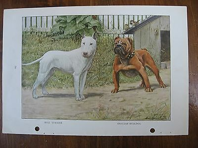 Vintage National Geographic Louis Fuertes Bull Terrier English Bulldog Prints
