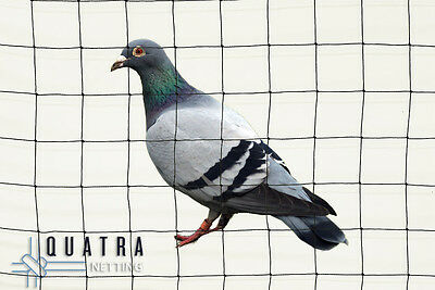 Anti Pigeon/bird exclusion netting, Professional Grade Knotted 50mm - 20m x 20m