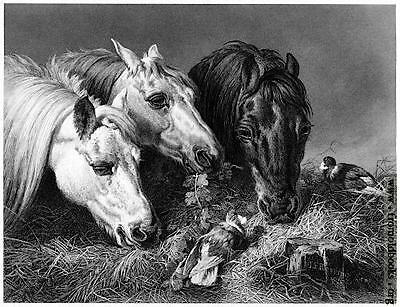 The scanty Meal (horses-Cavalli ) Herring-Hacker from The Art Journal  1851