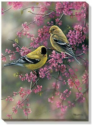 Goldfinch and Redbud by Rosemary Millette Wrapped Canvas Art