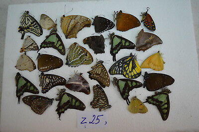 z25  # Lot of unmounted butterfly NORTH Vietnam