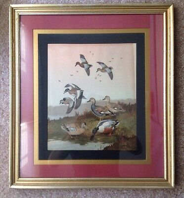 1950s 1960s CINNAMON TEAL WIDGEON GADWALL SHOVELLER DUCK PRINT, LYNN BOGUE HUNT