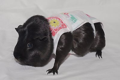 Piggy Pants Guinea Pig Diapers-Flowers  ***FREE SHIPPING***