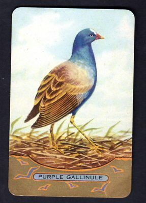 Coles Swap Card - Purple Gallinule