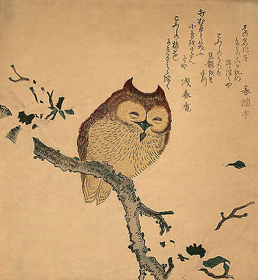 Japanese Art Reproductions: Birds: Owl perched on magnolia tree - Fine Art Print