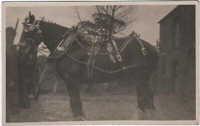 Real Photo Postcard - Horse In Harness & Ribbons - Lincolnshire Fens