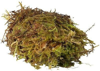 Monkfield Live Sphagnum Moss, 1 Kg, Pack Of 4
