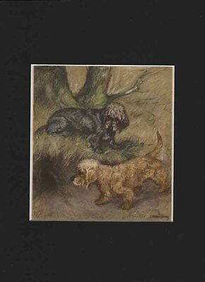 Vintage Dandie Dinmont Dogs  Print 1947  by G. VERNON STOKES - 9 X 12