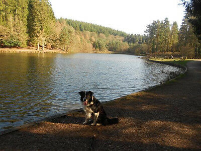 29th January 2018 Mon-Fri 4 nights dogfriendly cottage Forest of Dean