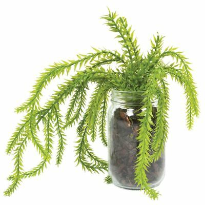 NEW Green Hassle Fern Jar Large By Freedom