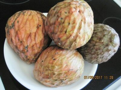 Custard apple, Bullock's Heart, Annona reticulata 10 FRESH seeds ORGANIC