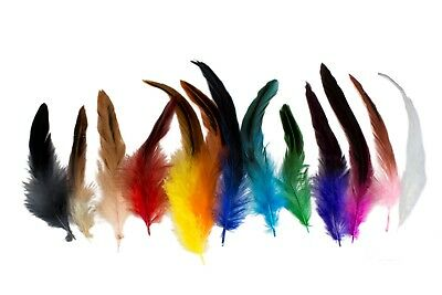 5-8 Inch Schlappen Rooster Feathers Various Feathers