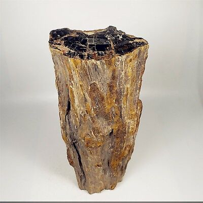 322mm 4370g Polished PETRIFIED WOOD BRANCH Fossil Madagascar A1650