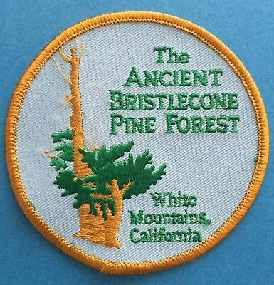 Vintage 1980's The Ancient Bristlecone Pine Forest Travel Hipster Patch Crest