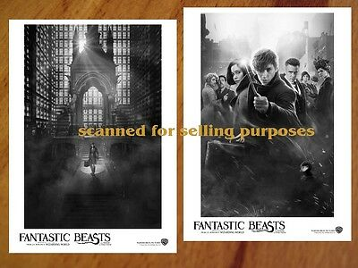 FANTASTIC BEASTS and where to find them RARE 50 PRESS PHOTO SET Redmayne ROWLING