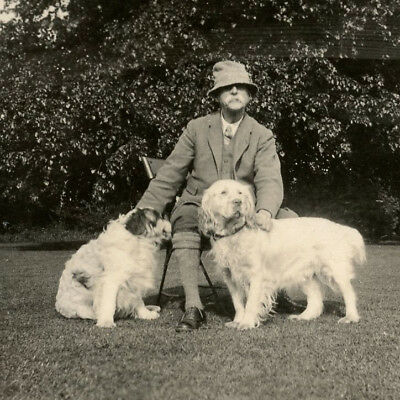 1920s MAN WITH TWO CLUMBER SPANIELS DOGS SNAPSHOT PHOTO VINTAGE GUNDOG