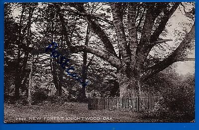 Old Postcard Knightwood Oak Tree New Forest Hants Hampshire Nr Lyndhurst
