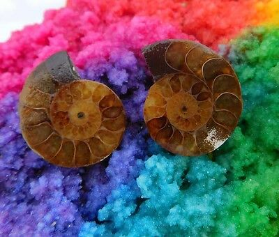 53 Cts. 100% Natural Matched Pair Of Ammonite Shell  Mineral Specimen (NH127)