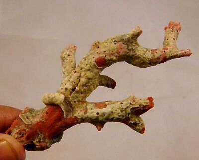80 Cts. 100% Natural Elegant Rare Rough Red Coral Stick Minearls Specimen RM46