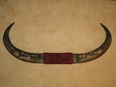 """Vintage Large Water Buffalo Horns Scrimshaw Hand Carved 43"""" Long Philippines"""